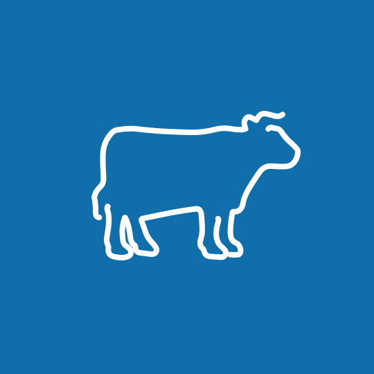 cattle-icon@2x